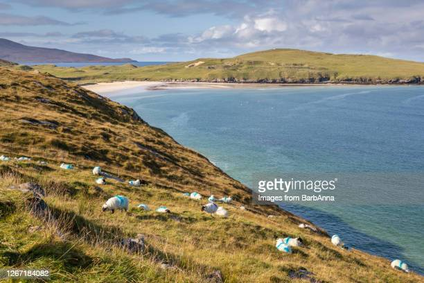 view across the bay, isle of harris, outer hebrides, scotland - western isles stock pictures, royalty-free photos & images