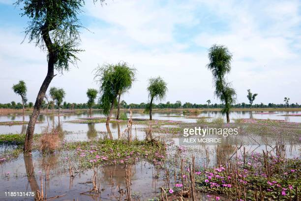 View across the remaining flood waters in Yusuf Batir refugee camp in Maban, South Sudan on November 25, 2019. - Large areas of eastern South Sudan...