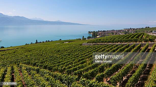view across the vineyards towards the village of cully, lake geneva at back, canton vaud, lake geneva, switzerland, europe - vaud canton stock photos and pictures