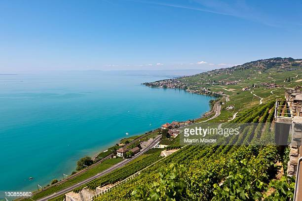 view across the vineyards towards the village of cully, lake geneva at back, canton vaud, lake geneva, switzerland, europe - vaud canton stock pictures, royalty-free photos & images
