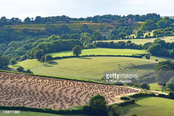 View across wooded pastoral countryside in England with hay mounds and grazing cattle visible in the distance taken on July 29 2019