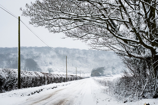 View along a rural road lined with snow-covered trees and hedges, with trees on a hill in distance. - gettyimageskorea