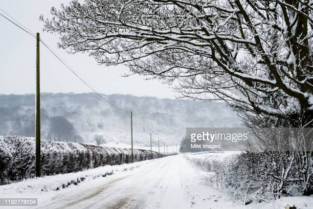 view along a rural road lined with snow-covered trees and hedges, with trees on a hill in distance. - cold temperature stock pictures, royalty-free photos & images