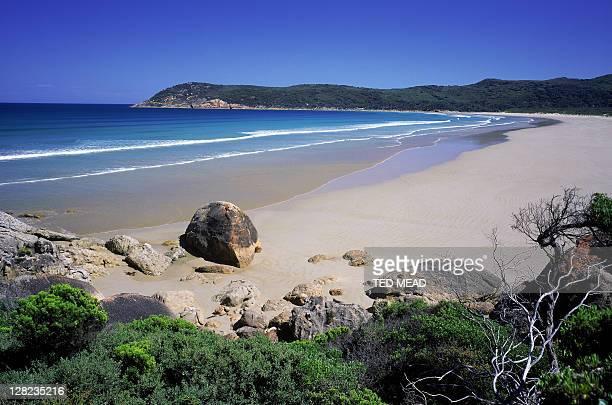 view along beach, norman bay, wilsons promontory np, vic, australia