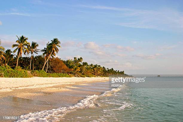 view along naples beach from the sea, lush greenery & sand - naples florida stock pictures, royalty-free photos & images