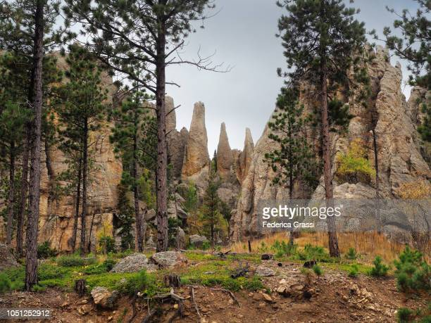 view along the needles highway in south dakota - black hills stock pictures, royalty-free photos & images
