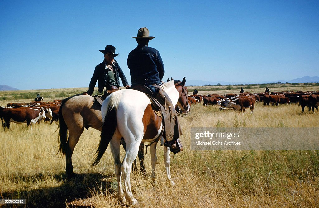 A view as cattle ranchers look over the herd of cows in Montana.
