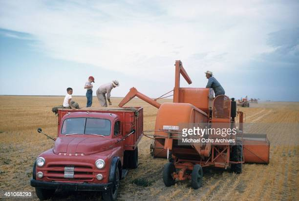A view as two boys help harvest the wheat with a Case tractor and Dodge pickup truck to haul the wheat in Oakley Kansas