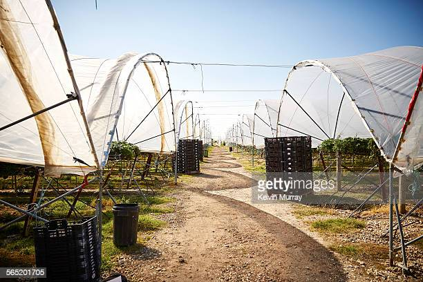 A view between modern agricultural poly tunnels.