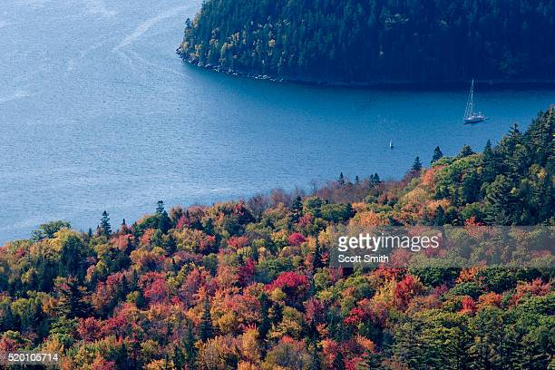 ACADIA NATIONAL PARK, MAINE. USA. View forest in autumn & sailboat anchored in Somes Sound from Acadia Mountain in autumn. Mt. Desert Island.