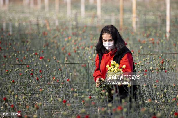 View from a flower greenhouse in Turkey's Antalya on February 07, 2021. 70 million branch cut flowers were sent to 22 countries including the...