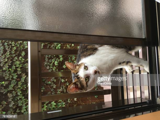 view from a window - mamigibbs stock photos and pictures