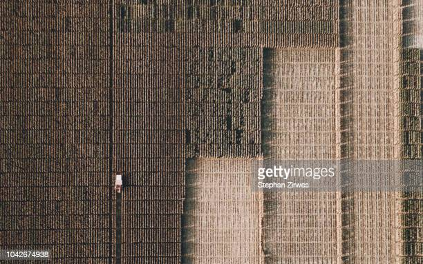 View from above combine harvester harvesting crop
