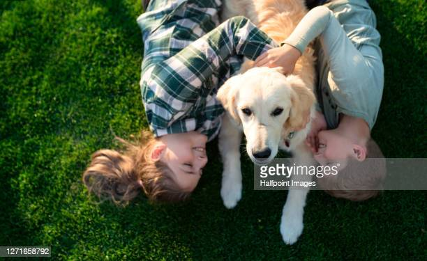 view from above of small boy and girl playing with dog outdoors in garden. - 訓練犬 ストックフォトと画像