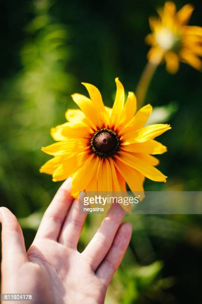 view from above on the hand of young woman holding beautiful marigold flower on the sunset