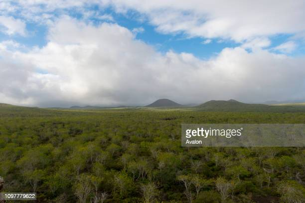 View from Baroness Point of the forest on Floreana Island in the Galapagos National Park Galapagos Islands Ecuador