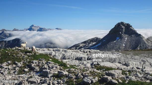 view from batognica mountain - slovenia stock pictures, royalty-free photos & images
