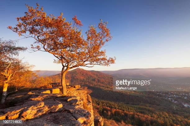 view from battert rocks, merkur mountain, baden baden, black forest, baden wurttemberg, germany, europe - baden baden photos et images de collection