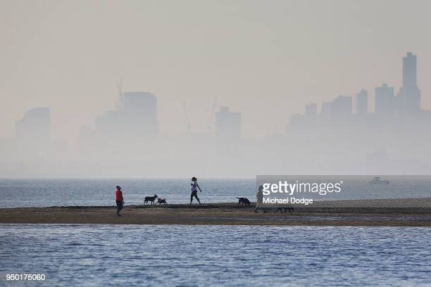 A view from Brighton foreshore is seen as dogs and their owners walk in front of city fog on April 23 2018 in Melbourne Australia Melbourne has been...