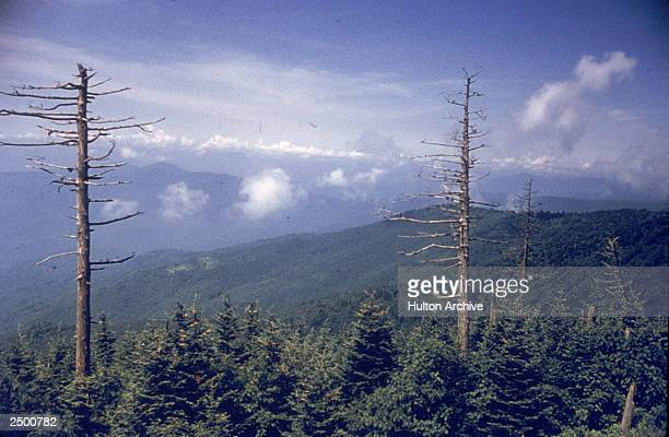 View from Clingman's Dome in the Great Smoky Mountains Tennessee circa 1960