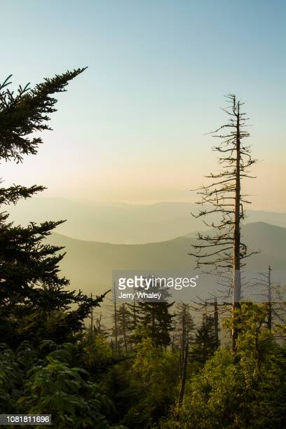 view from clingmans dome - clingman's dome - fotografias e filmes do acervo