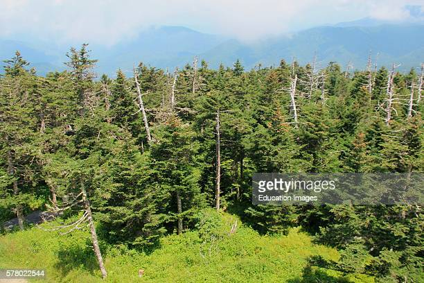 view from Clingman's Dome Tennessee Great Smoky Mountains
