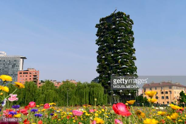 """View from Milan's botanical park """"Library of Trees"""" in the Porta Nuova district on May 22, 2020 shows flowers and the Vertical Forest high-rise..."""