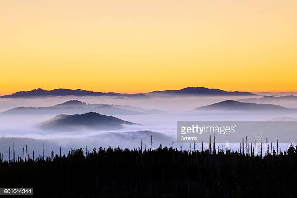 View from Mount Lusen over the Bavarian Forest covered in mist at sunrise Bavarian Forest National Park Bavaria Germany