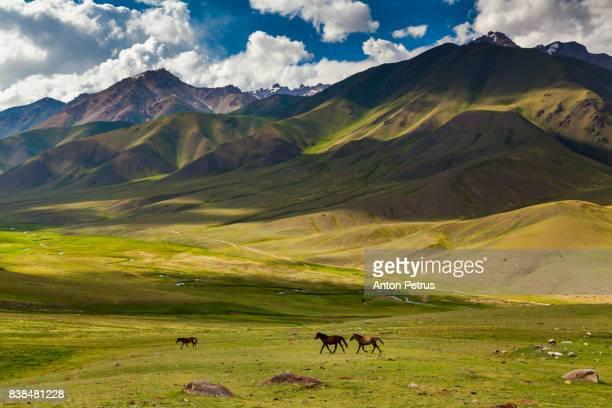 view from pass to green valley and the mountains. kyrgyzstan - bisjkek stockfoto's en -beelden
