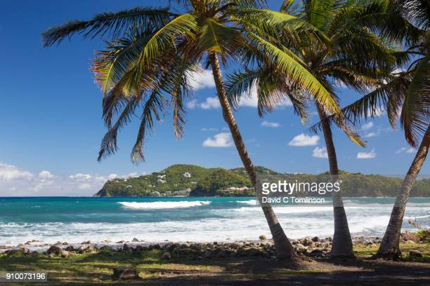 View from rocky shore to Pointe du Cap, coconut palms in foreground, Pigeon Island National Landmark, Gros Islet, St Lucia