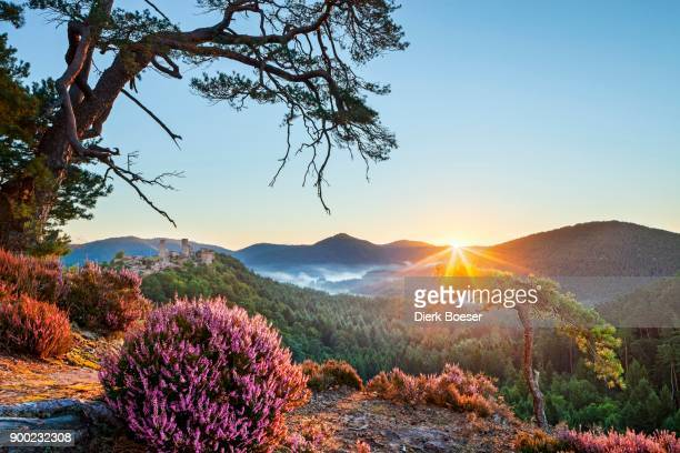 view from schuetzenwand, mountain, sunrise, altdahn castle in back, dahn, palatinate forest, rhineland-palatinate, germany - castle mountain stock photos and pictures