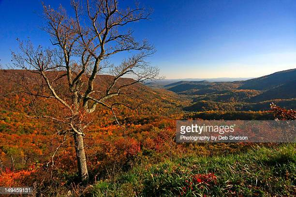view from skyline drive - skyline drive virginia stock photos and pictures