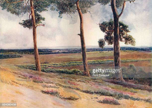 View from Staple Hill' from 'A Pilgrimage In Surrey Vol 1' by James S Ogilvy 1914 Staple Hill Chobham Common Surrey