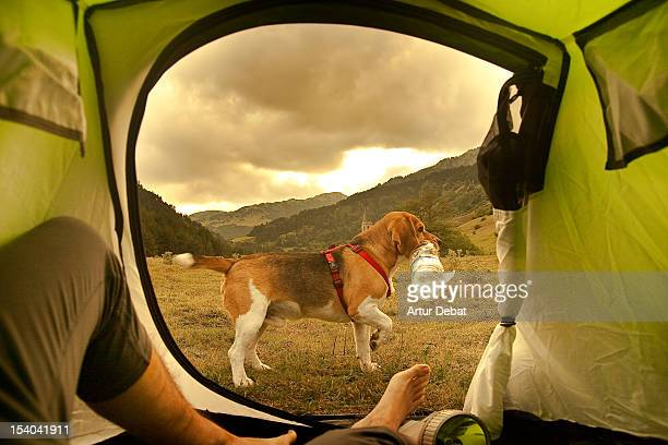View from tent with dog in landscape.