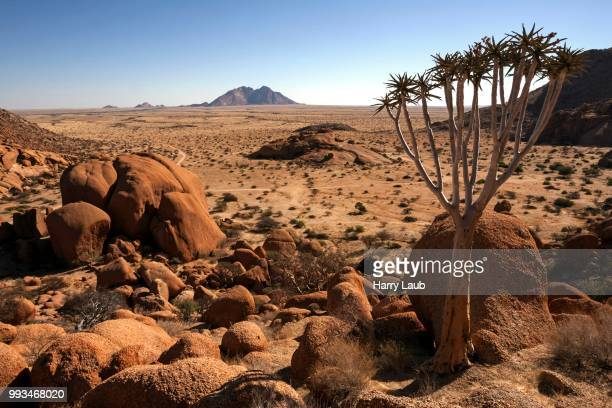 View from the Great Spitzkoppe, quiver tree (Aloe dichotoma), Little Spitzkoppe behind, Damaraland, Namibia