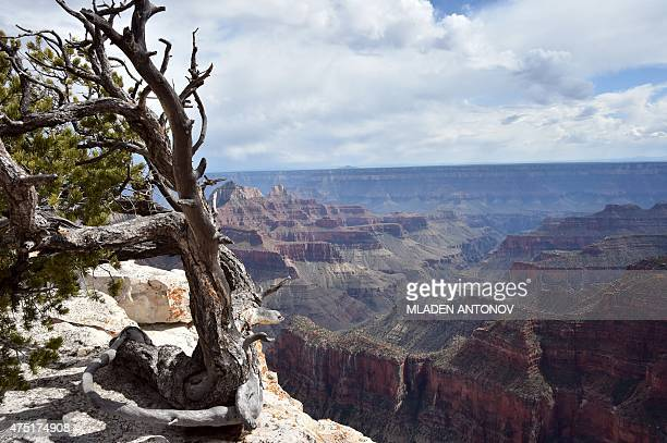 A view from the North Rim of the Grand Canyon on May 2015 AFP PHOTO/ MLADEN ANTONOV