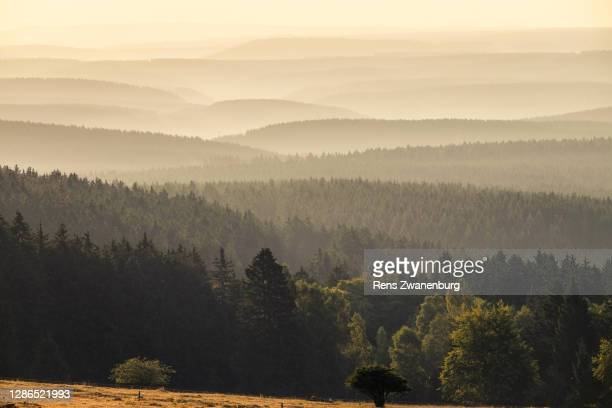 view from the quesenbank, schierke. - saxony anhalt stock pictures, royalty-free photos & images