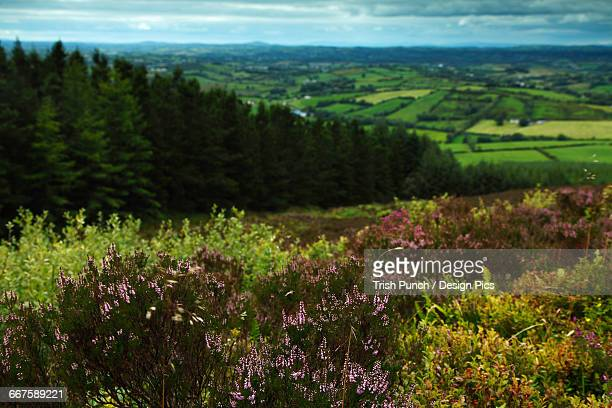 View from the top of Loughanleagh mountain