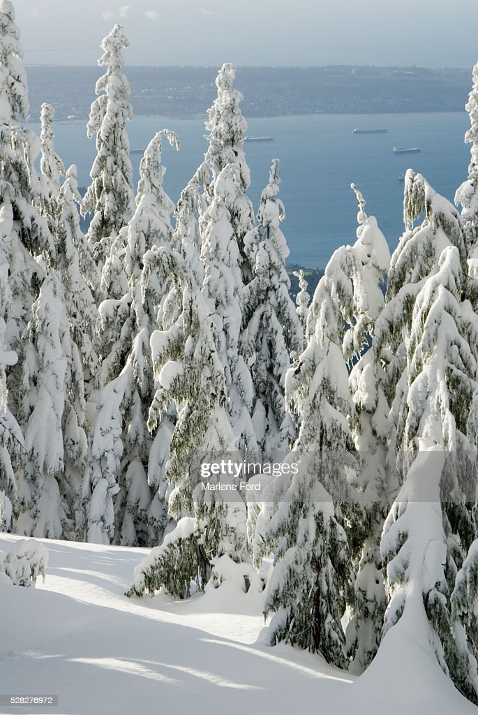 View From Top Of Grouse Mountain, Vancouver, British Columbia : Stock Photo