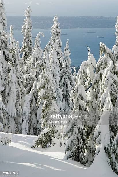view from top of grouse mountain, vancouver, british columbia - grouse mountain ストックフォトと画像
