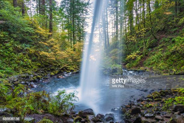View from trail behind Ponytail Falls Columbia River Gorge National Scenic Area Oregon