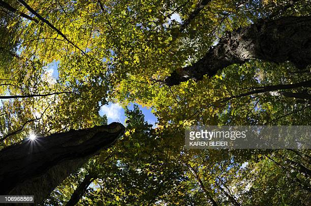 A view in a forested area of Door County in Wisconsin is seen on October 2 2010 AFP PHOTO/Karen BLEIER