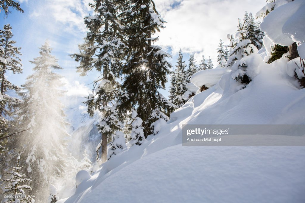 View into a snowy forest with sun after heavy snowfall : Stock-Foto
