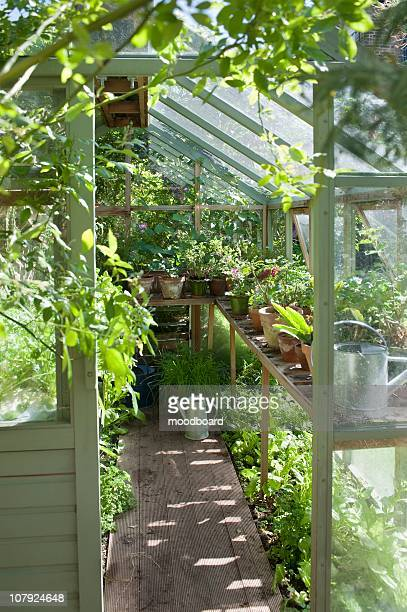 view into sunlit greenhouse - streatham stock pictures, royalty-free photos & images