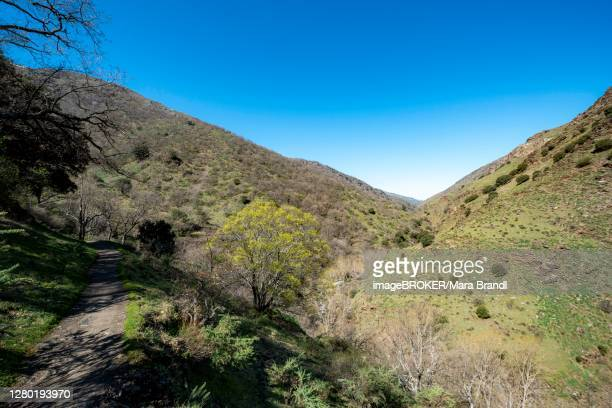 view into the valley, hiking trail vereda de la estrella, sierra nevada near granada, andalusia, spain - granada provincia de granada stock pictures, royalty-free photos & images