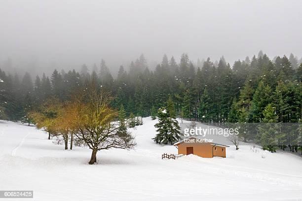 View near Abant lake in winter, Bolu Turkey