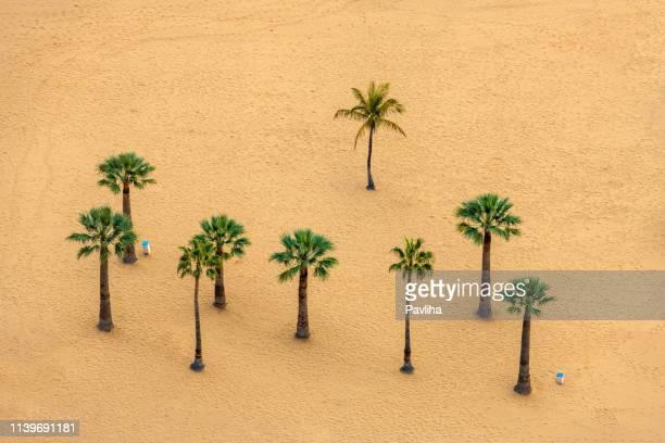 uitzicht op een prachtig zandstrand en palm boom in canarische eilanden close up, tenerife, spanje - tenerife stockfoto's en -beelden
