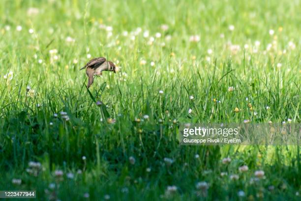 view of a bird on field - nightingale stock pictures, royalty-free photos & images