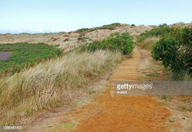 View of a boardwalk on the Norfolk Coast Path over sand dunes at Burnham Overy Staithe, Norfolk, England, United Kingdom.