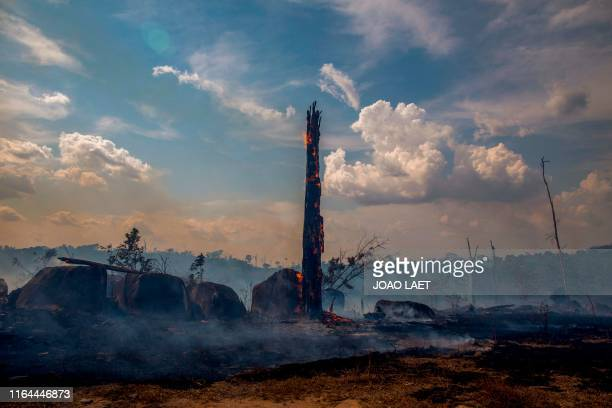 TOPSHOT View of a burnt area of forest in Altamira Para state Brazil in the Amazon basin on August 27 2019 Brazil will accept foreign aid to help...